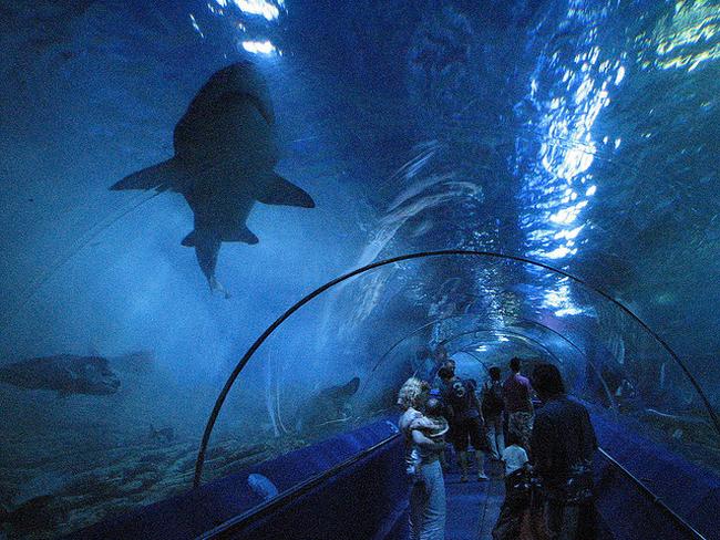 aquario-de-perth-australia